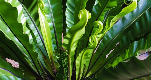 Which Is The Right Plant for Your Room