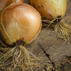 Onion Reducing Risk of Stomach Cancer – Nutrition Facts and Health Effects