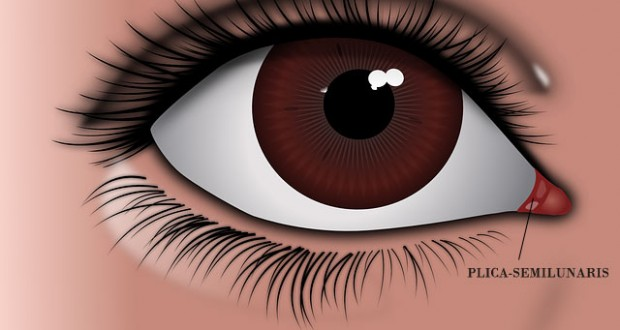What's that pink corner in your eye: The Third Eyelid?