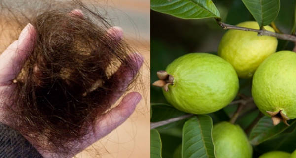 Stop Hair Loss and Grow Back Your Hair with Guava Leaves