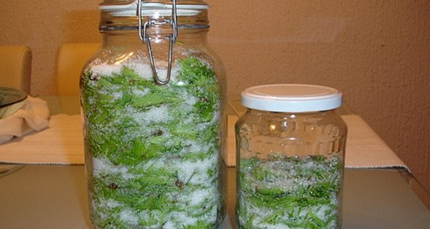 Recipe for Pine Needle Syrup: Treats Cough, Bronchitis, Throat inflammation and Boosts Immunity