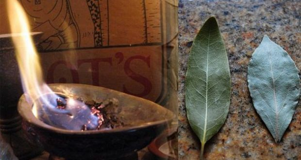 Burn a Bay Leaf in Your Home and Discover Amazing Life Hack