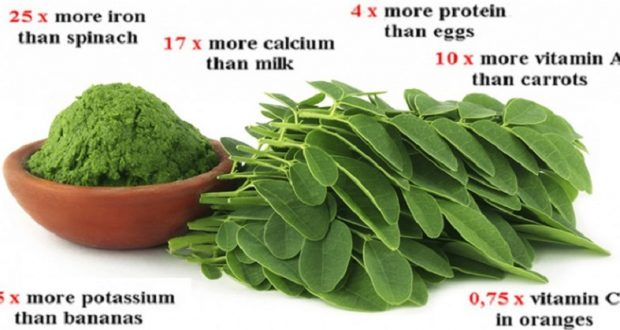 New Study Reveals Amazing Results: Cure to 5 Different Types of Cancer Could Be in This Herb