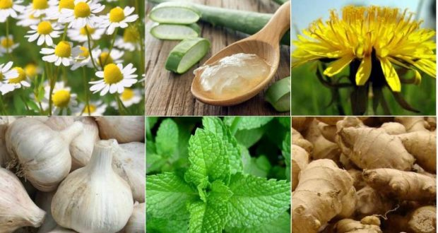 These Proven Homemade Remedies Will Improve Your Health and Strengthen Your Body