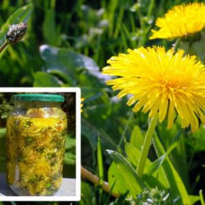 Simple and Easy to Prepare: Treat Hepatitis, Kidneys, Stomach, Liver and Cancer with Dandelion