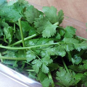 Detoxify Your Body and Remove 80% of Heavy Metals in Just 42 Days with the Power of Cilantro