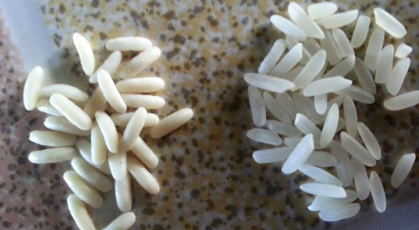 The World Is Swamped with Fake Rice: This How to Recognize and Avoid It