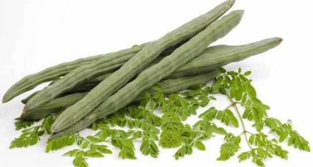 Moringa tree – The Miracolous tree