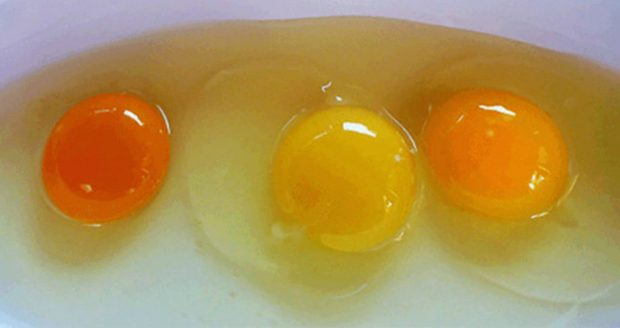 Here's Why You Need To Consume Organic Eggs And How To Recognize Them!