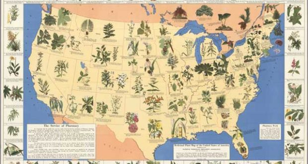 See How Amazing This 1930's Pharmacist's Map Can Be For Many Health Conditions!