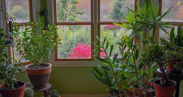 Plant Lovers Only: Would You Like To Have Strong And Beautiful House Plants? Check Out This Useful Tips!