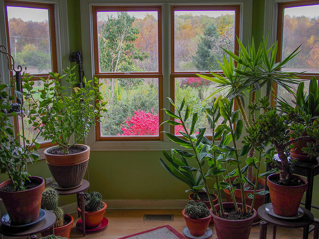 Plant lovers only would you like to have strong and beautiful house plants check out this - Beautiful house plants ...