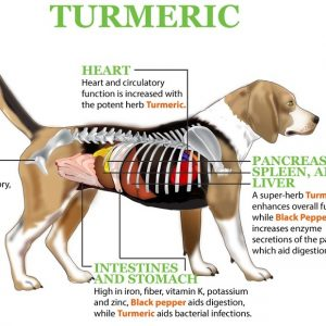 Help Your Dog: Make Golden Turmeric Paste and Give It to Your Pet to Prevent Cancer and Relieve Inflammation