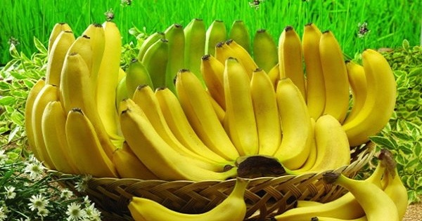 Do You Love to Eat Bananas? These 10 Amazing Facts Will Make You Love Them Even More