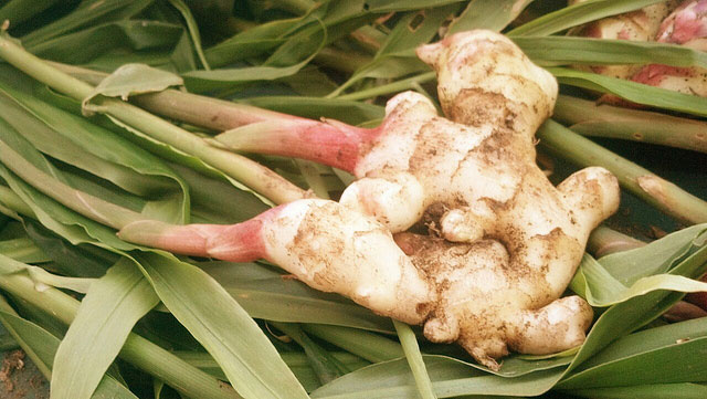 When And Why To Avoid Ginger Consumption