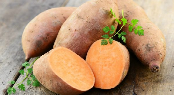 Did You Know That Protein in Sweet Potato Can Destroy Cancer Cells?