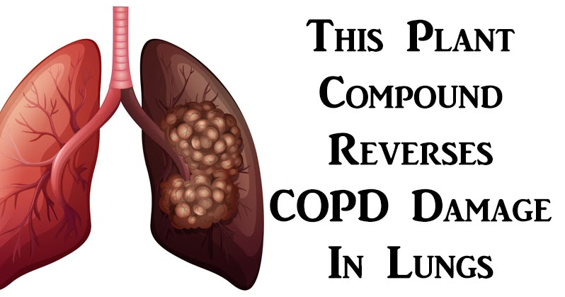 New Research Shows: This Plant Compound Reverses COPD Damage in Lungs