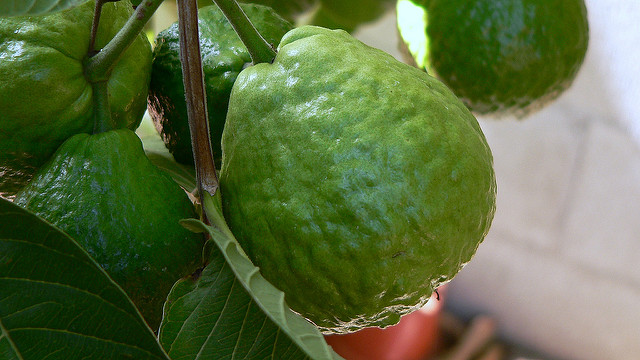 How Guava Leaves Can Solve All Skin Problems!