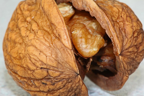 Walnut in the service of beauty