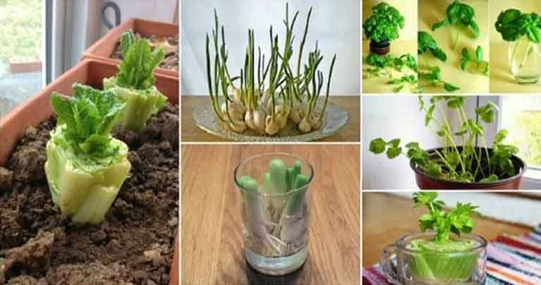 You Can Regrow These 10 Plants Again and Again and Have Fresh Veggies All the Time