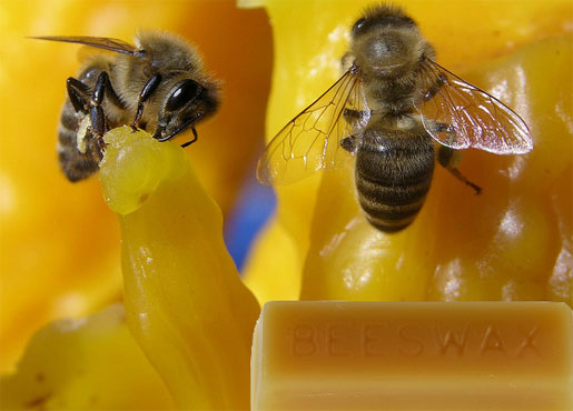 You Should Get Informed About Bee Wax And Its Magical Properties!