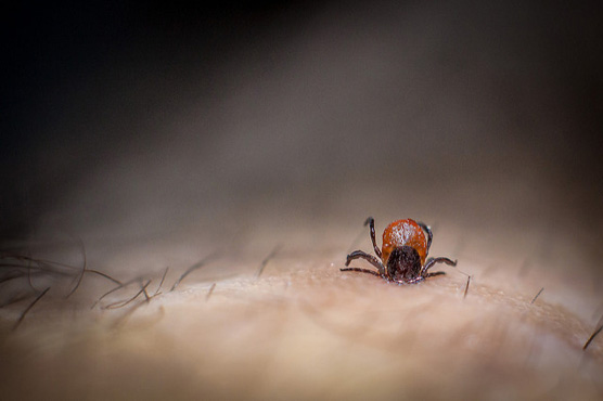 How To Easily Get Rid Of Ticks And Prevent Tickborne Disease!