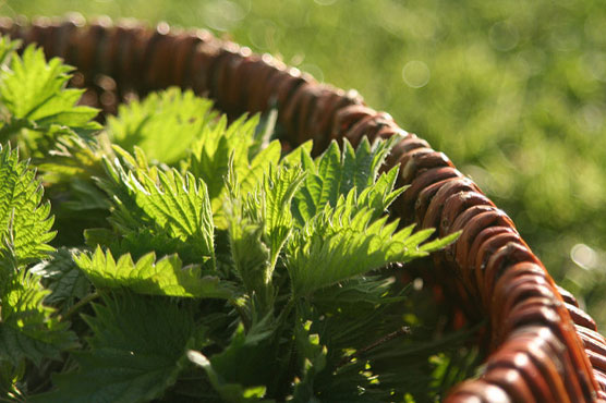 This Recipe With Nettle Is Extremely Useful and Simple!
