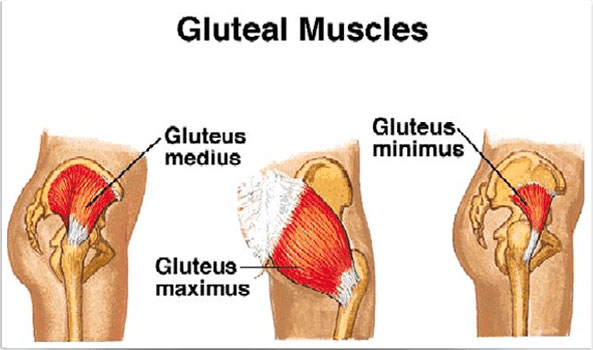 Best Exercise For The Glutes Backed By Science And Self Experience